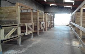 Un poney club moderne entièrement neuf, aéré pour le confort des poneys